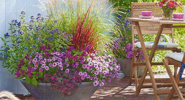 Контейнерные цветы для террасы