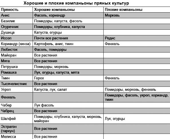 Таблица совместимости пряностей на грядке