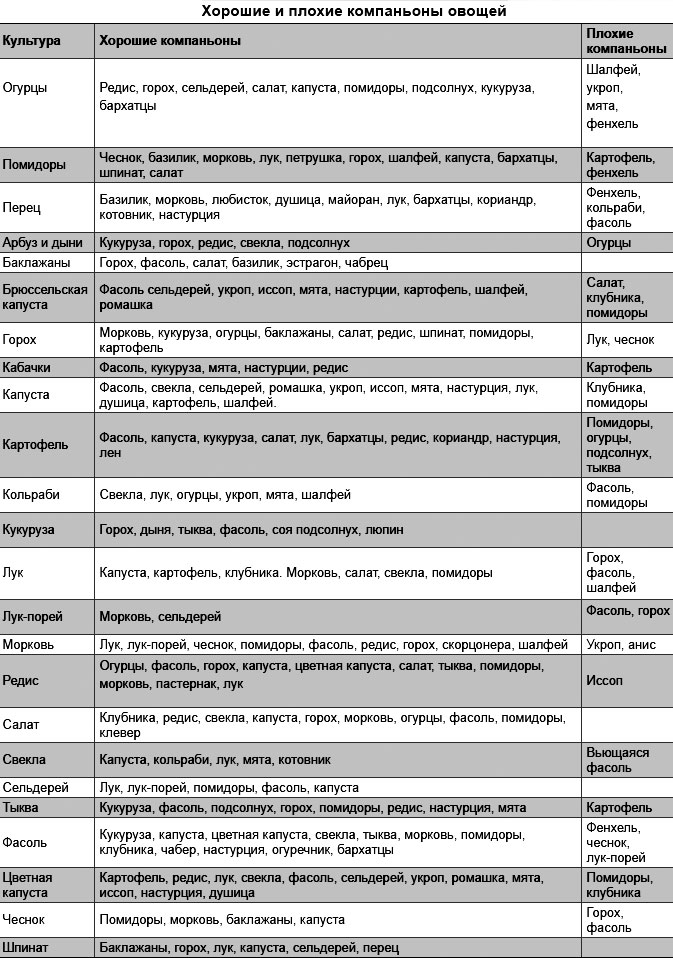 Таблица совместимости овощей на грядке